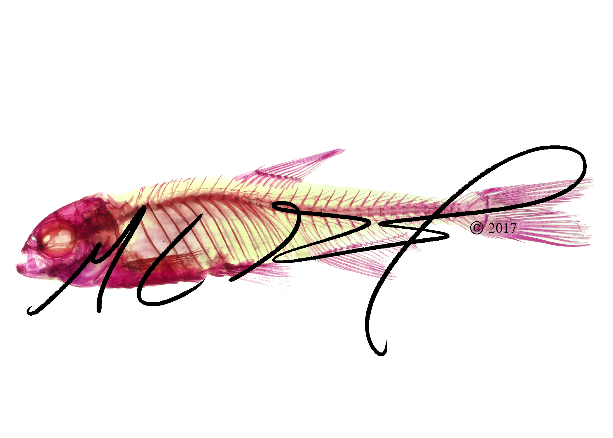 Fishes – MCGMorph