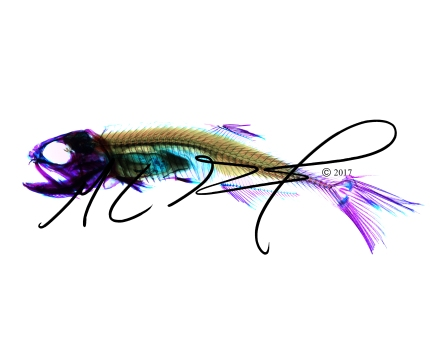 Anchoa mitchilli, the bay (or common) anchovy. Cleared and stained by Stephanie Guidry, photographed and edited by M.C. Gilbert