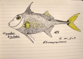 Triacanthus biaculeatus, the short-nose tripod fish, #SundayFishSketch, @Bathysaurus, 2017