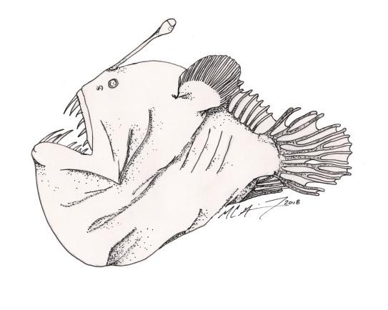 Melanocetus johnsonii, a black seadevil, female. #SundayFishSketch, 2018