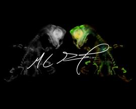 """Alternate Reality X"", featuring Forpus coelestis, celestial parrotlet, hatchling. MC Gilbert 2018"