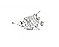 Centriscopus humerosus, the banded bellowsfish. #SundayFishSketch #Inktober2018 MC Gilbert 2018