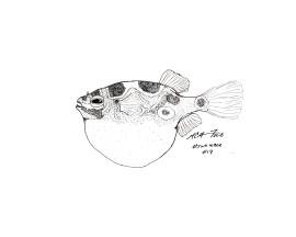 Day 17 of #Inktober: Swollen. Dichotomyctere ocellatus, a figure eight puffer. MC Gilbert 2018