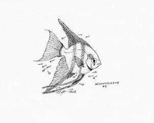 Day 8 of #Inktober: #Star. Pterophylum scalare, angelfish. MC Gilbert 2018