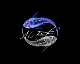 """Alternate Reality XI"", featuring Pterygoplichthys pardalis, Amazon sailfin catfish. MC Gilbert 2018"
