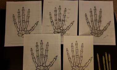 Left Hand, Osteology - proofs. MC Gilbert 2019