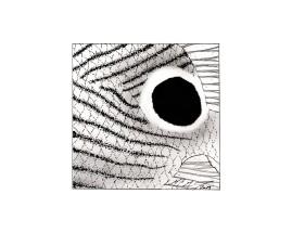 Chaetodon capistratus, foureyed butterflyfish, pattern. #SundayFishSketch. MC Gilbert 2019