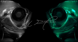 Alternate Reality XVI, featuring Pterycombus petersii, prickly fanfish. MC Gilbert 2021